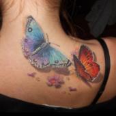 kolorowe motyle 3d