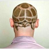 tatuaż żółw na głowie 3d