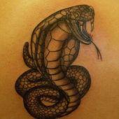 wąż kobra