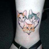 koty na nodze